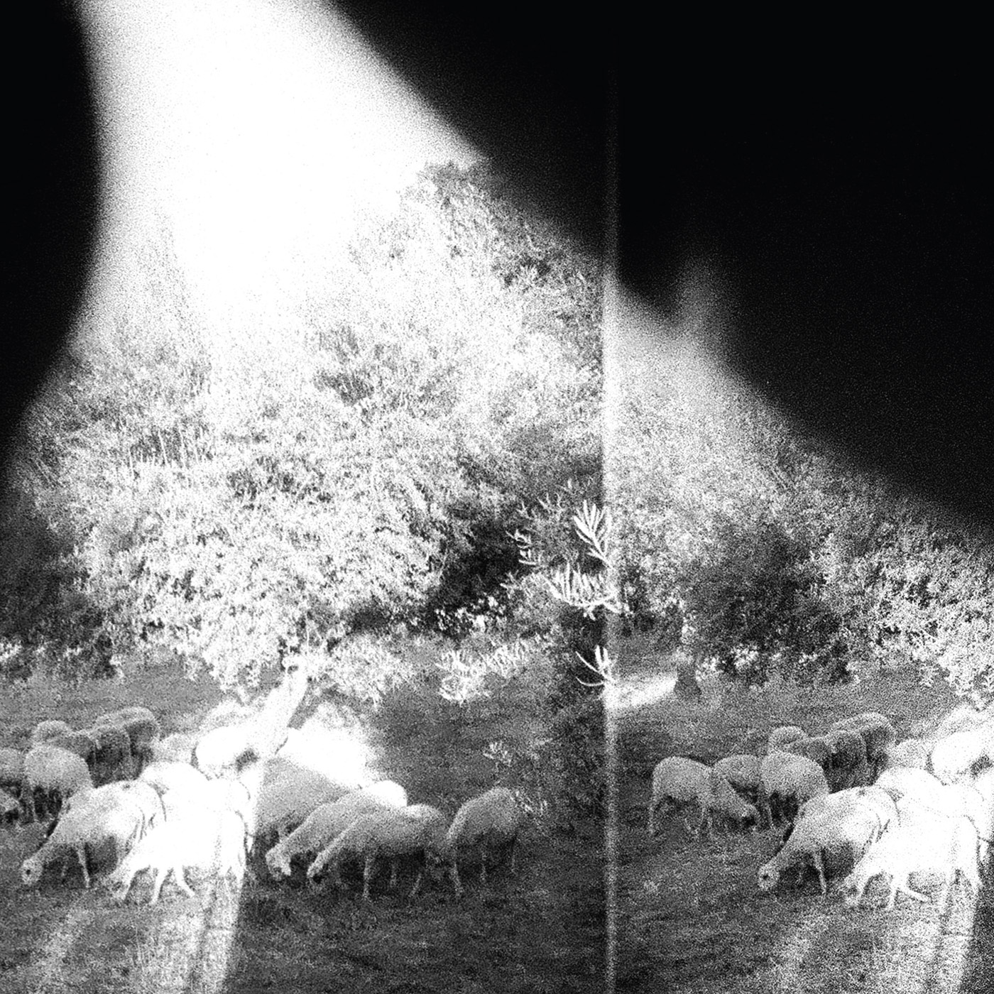 Godspeed You Black Emperor ! | 'Asunder, Sweet And Other Distress 180 gr.